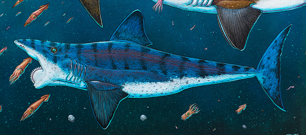 "The curious and mysterious Helicoprion, or ""buzzsaw"" shark"
